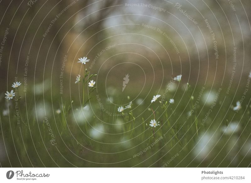 Delicate little flowers in a meadow. Meadow Green White bokeh Blossom Nature Garden Blossoming Spring Summer Plant Colour photo Yellow naturally Deserted Grass
