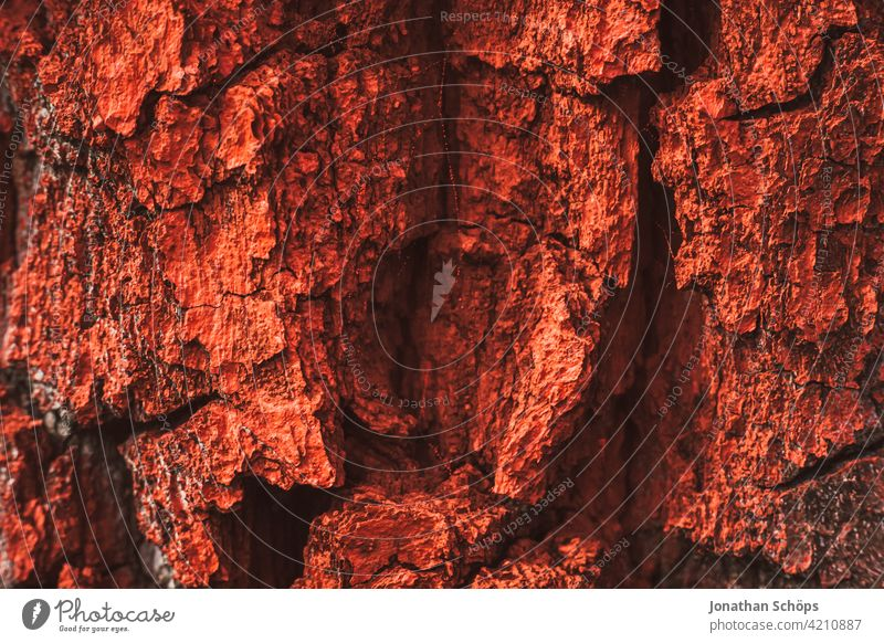 bark painted red Structures and shapes Forest Colour photo Nature Close-up Tree Tree bark outdoor Exterior shot Red red color Forest death Warning colour label