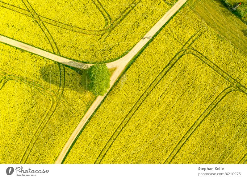 Aerial of a wide rapeseed oil plants agricultural field of many yellow blooming blooson, typical drone photo for a spring time concept. summer nature