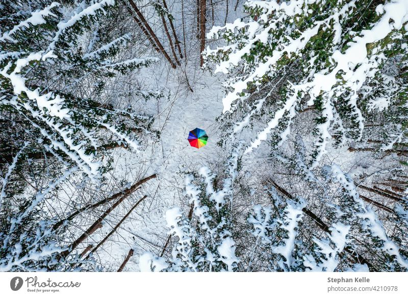 Color contrast concept of a rainbow colored umbrella in the middle of a white snow covered forest, idyllic moment of the winter season. Winter cold nature Park