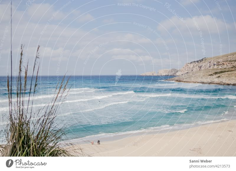Cala Mesquida beach in Mallorca Beach Ocean Sand Water Waves Sun Sky Vacation & Travel Beautiful weather coast Exterior shot Colour photo Nature Deserted Day