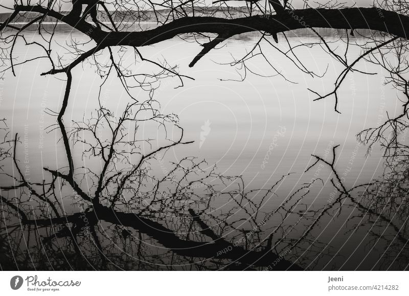 Bare tree above the lake with reflection in the smooth water surface Reflection in the water Moody Calm Rest tranquillity Light Landscape Water Nature Sky
