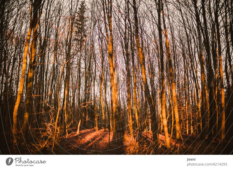 Autumn forest flooded with light Forest Autumnal Autumn leaves Automn wood Autumnal colours Early fall Autumnal weather Autumnal landscape autumn mood