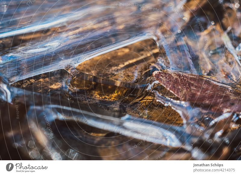 brown leaf frozen on the ground in ice closeup Deserted Day Close-up Exterior shot Background picture Colour photo Structures and shapes Autumnal colours