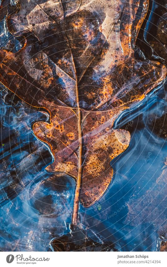 brown oak leaf frozen on the ground in ice closeup Deserted Day Close-up Exterior shot Background picture Colour photo Structures and shapes Autumnal colours