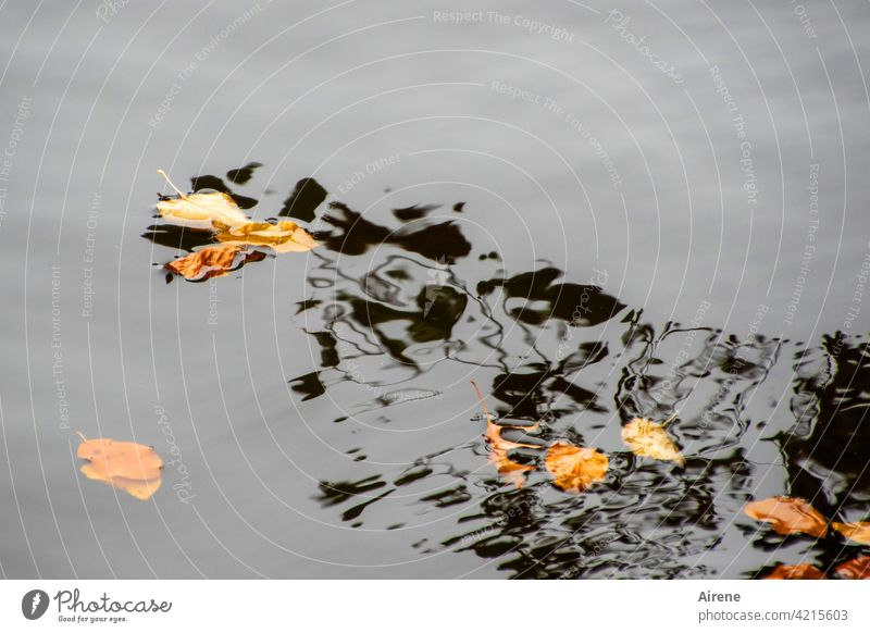 Emergence of the water spirits Water leaves Autumn reflection Shadow Ghosts Black Abstract Aquarius Mysterious Reflection Surface of water Calm Lake Pond Nature