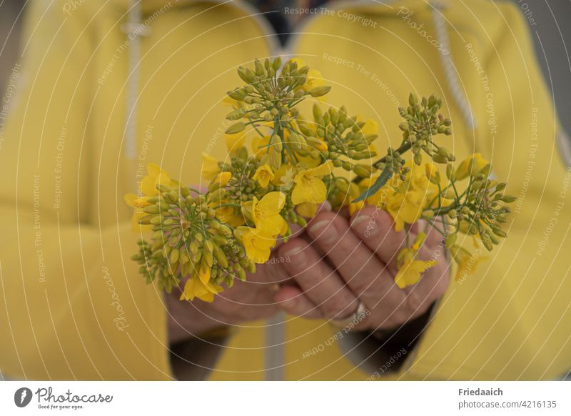 Yellow flowers in woman hands with yellow jacket Blossom yellow background blurred background Shallow depth of field Nature Toninton Colour photo Plant Close-up