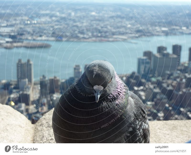 City Relaxation Animal Far-off places Freedom Gray Above Horizon Bird Flying Sit High-rise Wait Adventure Observe