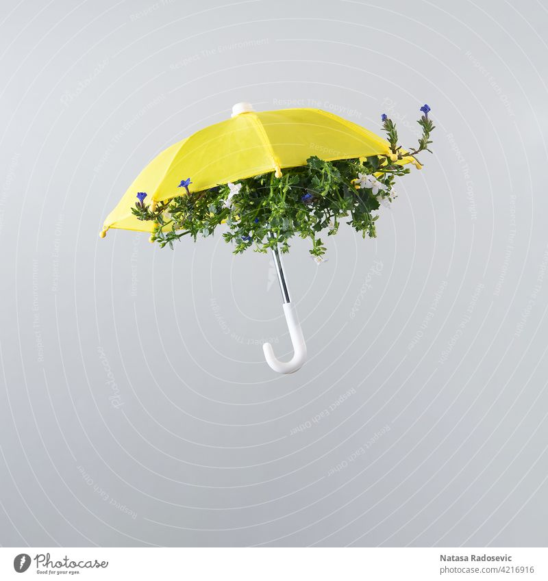 Spring flower bloom arranged inside yellow umbrella isolated on light gray background. Square aesthetic art autumn beautiful blossom color colorful concept