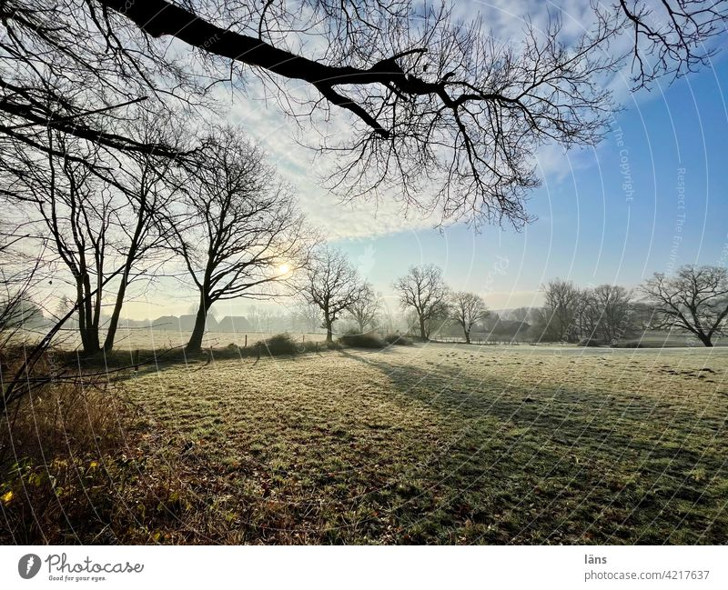 buckling landscape Knick Landscape Agriculture Exterior shot Deserted Beautiful weather Colour photo trees Tree Sky Sunlight Light Environment