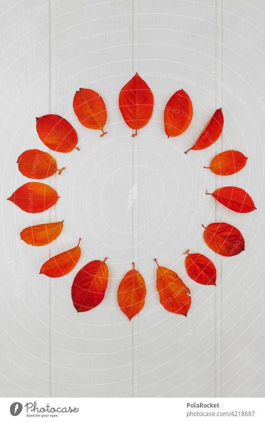 #A0# Autumn circle Autumnal Autumn leaves Autumnal colours Early fall autumn mood Red Orange Nature