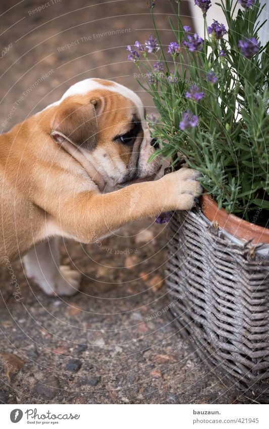 Dog Plant Joy Animal Baby animal Playing Lanes & trails Garden Leisure and hobbies Concrete Broken Cute Observe Touch Blossoming Curiosity