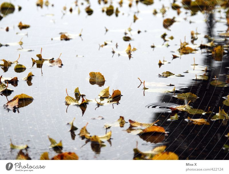 THE HARVEST Water Autumn Weather Bad weather Storm Rain Leaf To fall Cold Wet End Apocalyptic sentiment Transience Autumn leaves Autumnal Early fall