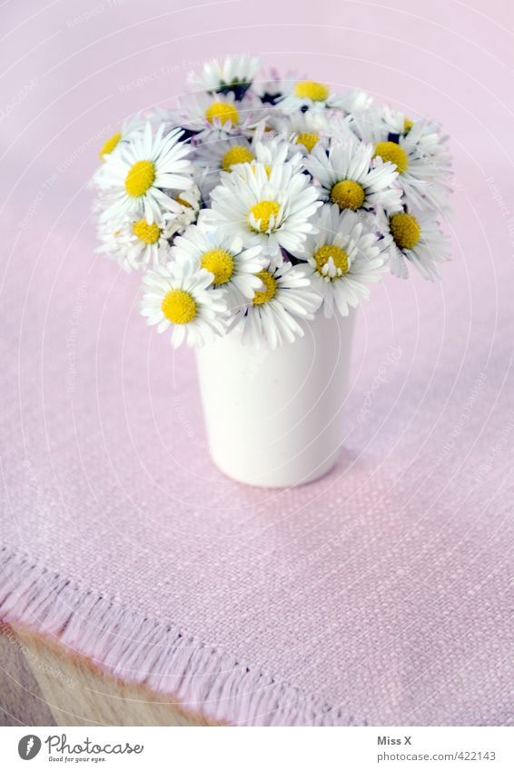 little flowers Decoration Flower Blossom Blossoming Bouquet Flower vase Tablecloth Table decoration Daisy Small Picked Display of affection Gift Love