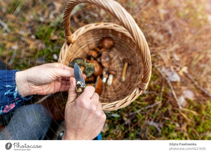 Picking mushrooms in the woods food fresh fungus healthy forest plants trees Poland day outdoors daytime nature autumn fall wild green wilderness
