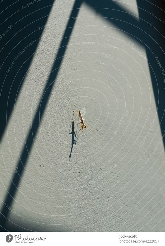 On the wall, lying in wait, a praying mantis... Praying mantis Sit Small Near Thin Warmth Perspective Shadow play Abstract Silhouette Sunlight