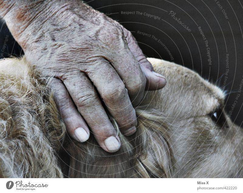 Eco and Umberto Human being Hand Fingers 60 years and older Senior citizen Animal Pet Dog Emotions Protection Safety (feeling of) Agreed Loyal Sympathy