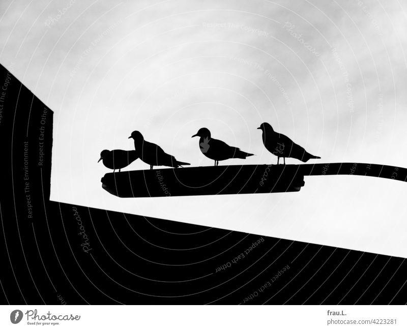 4 pigeons on 1 street lamp Lantern streetlamp Sky House (Residential Structure) Bird birds Contrast Town