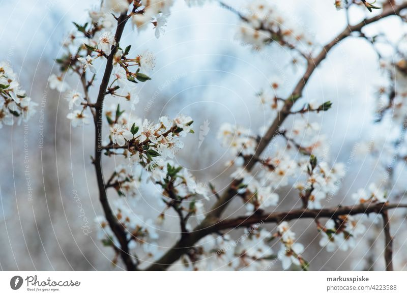 Colorful spring blossom beautiful beauty blaze of color bloom bokeh bright brown bunch closeup colorful colors colour countryside fantasy flora floral