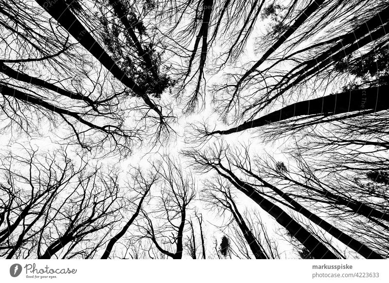 Tree tops in winter Tree trunk Root rootstock Forestry Forstwald forest forestry Woodground closeness to nature Natural regeneration Treetops leafless Winter