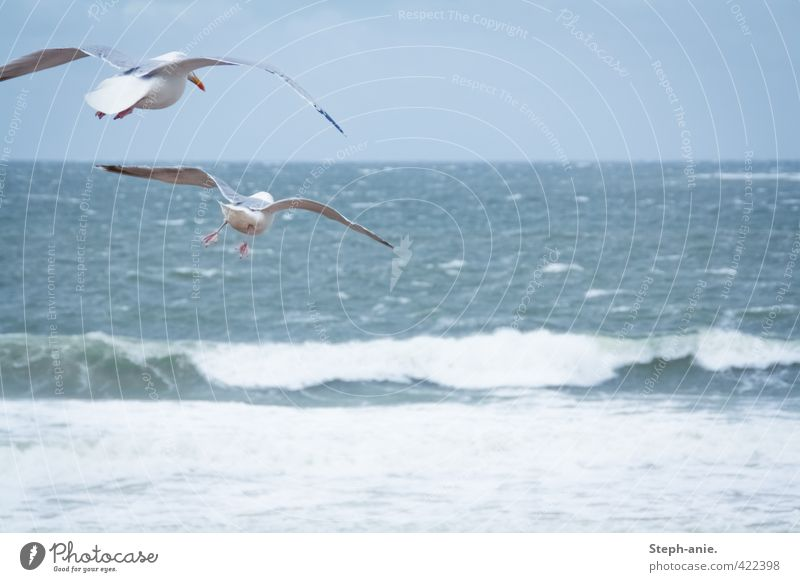 Take off! Air Water Clouds Bad weather Waves Coast Beach North Sea Ocean Bird Seagull 2 Animal Observe Movement Flying Hunting Looking Free Infinity Tall Cold