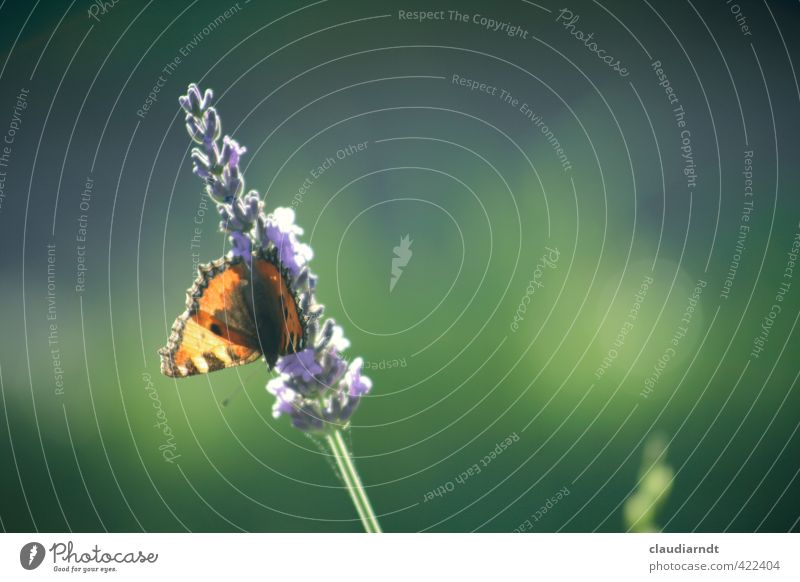 Nature Beautiful Green Plant Summer Flower Animal Blossom Natural Garden Orange Flying Beautiful weather Esthetic Wing Violet