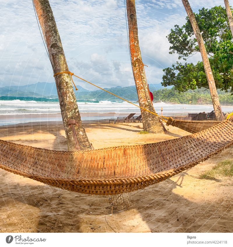view from an hammock near ocean  beach tropical palm travel vacation sea paradise summer resort water island sand landscape sky nature tree caribbean coast
