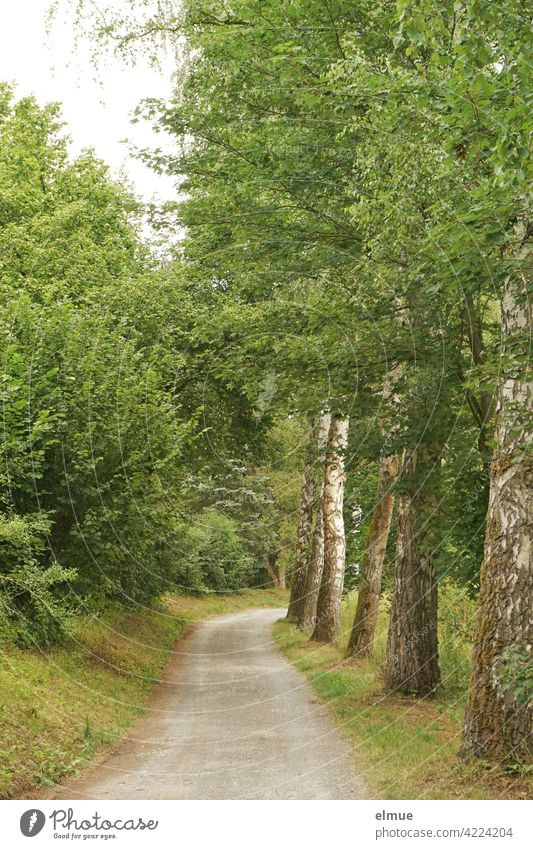 Path lined with meadow, green bushes and deciduous trees / excursion / active recreation Country road off curvy Curve Deciduous tree Maple tree leaves luscious