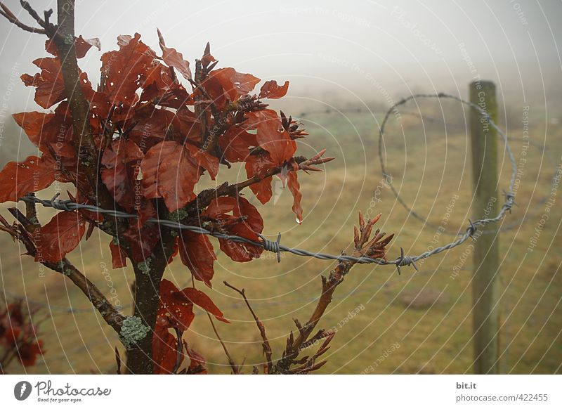 trapped in the fog Environment Nature Landscape Drops of water Autumn Winter Climate Bad weather Fog Rain Plant Bushes Meadow Field Dark Longing Loneliness