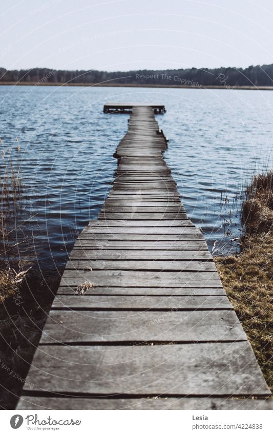 Walk on the water! Water Cold Wind Blue cold water Autumn Board Wood Furniture Bridge River Lake Grass silence autumn walk near the water Forest Trees