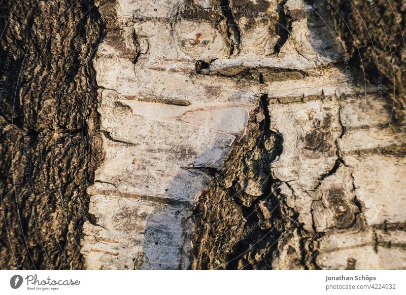 Biken bark close up Tree Wood Brown Tree bark Structures and shapes Macro (Extreme close-up) Crack & Rip & Tear Deserted Day Rough Colour photo Close-up Detail