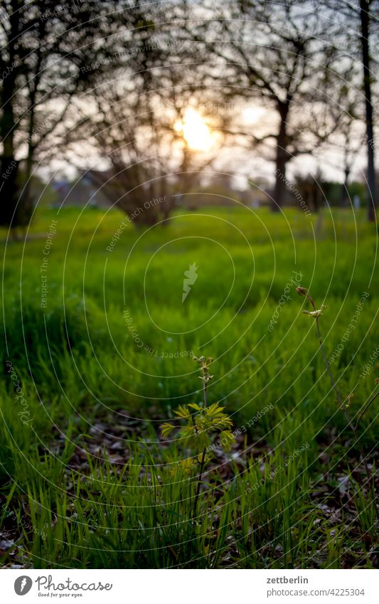 Evening twilight in spring with meadow and trees and so Branch Tree Dark Twilight Relaxation awakening holidays Spring spring awakening Garden Sky allotment