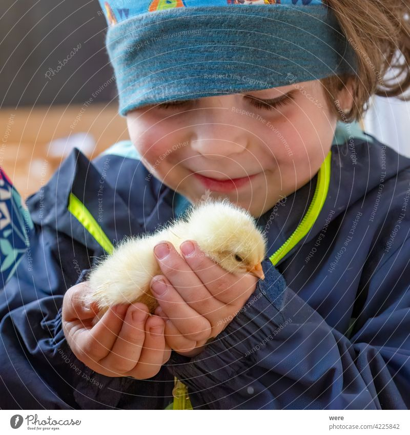 A child tenderly holds a chick in his hand Child Caucasian Joy Boy (child) Happy Infancy Marvel Experiencing nature Colour photo Human being 3 - 8 years Toddler