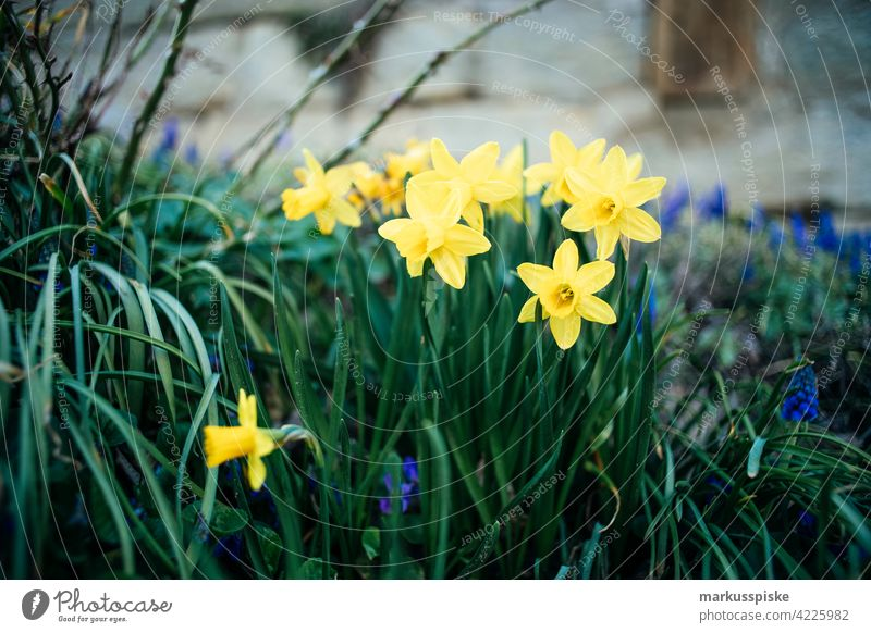 colourful spring flowers Outdoor beautiful beauty blaze of color bloom blossom bokeh bright brown bunch closeup colorful colors countryside fantasy flora floral