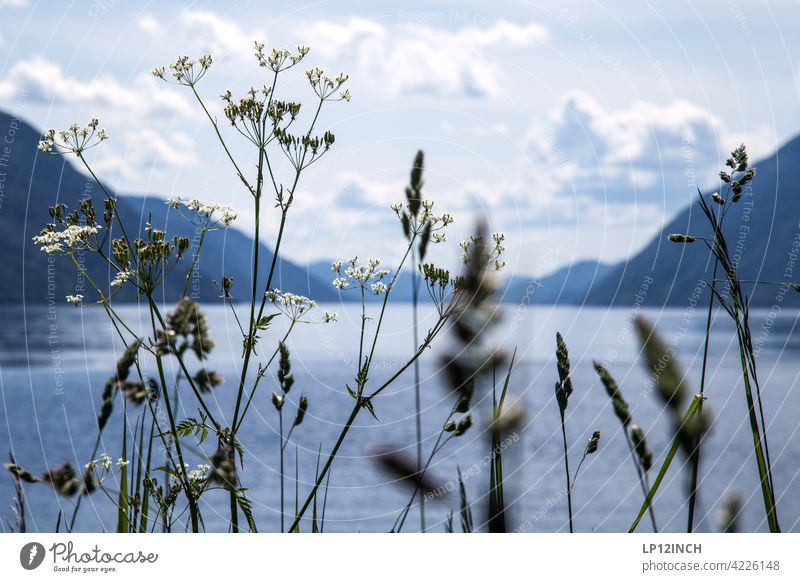 View of a fjord Norway Fjord River Mountain Nature Scandinavia Vacation & Travel plants Tourism voyage Water Relaxation Idyll Landscape Clouds