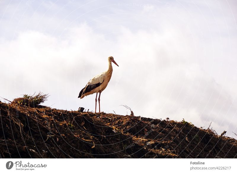 Kalif Storch - what was the magic word for the reversion again? birds Bird Stork Animal Exterior shot Colour photo Wild animal Nature Day Deserted Environment