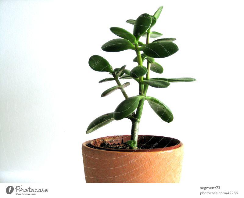flower Flower Pot Green Houseplant Plant Wall (building) Fresh White Leaf