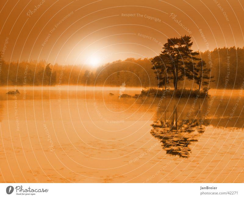 Tree Lake Island Sunrise Idyll Sweden