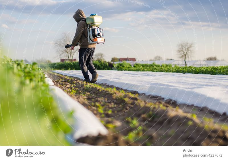 A farmer processes a field of potatoes from a mist sprayer. Protecting crops from pests and fungal infections. Control over the use of toxic chemicals when growing food. Crop resistance to pests.