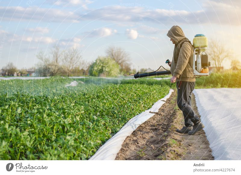 A farmer with a mist sprayer sprays fungicide and pesticide on potato bushes. Protection of cultivated plants from insects and fungal infections. Effective crop protection, environmental impact.