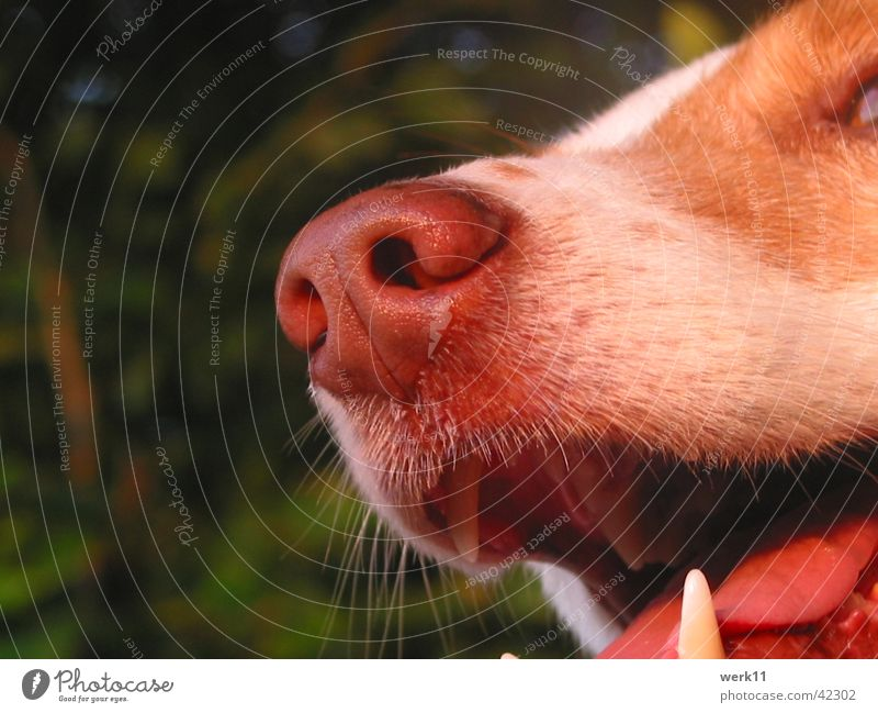 ...have the right instinct! Dog Snout Nose Detail