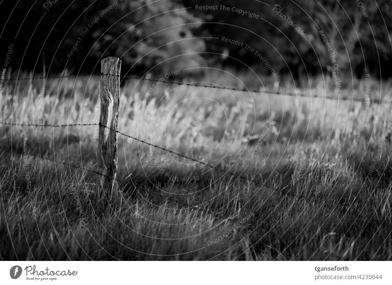 Old pasture fence Fence Barbed wire Fence post Exterior shot Deserted Barbed wire fence Day Barrier Safety Thorny Protection Wire Willow tree livestock farming