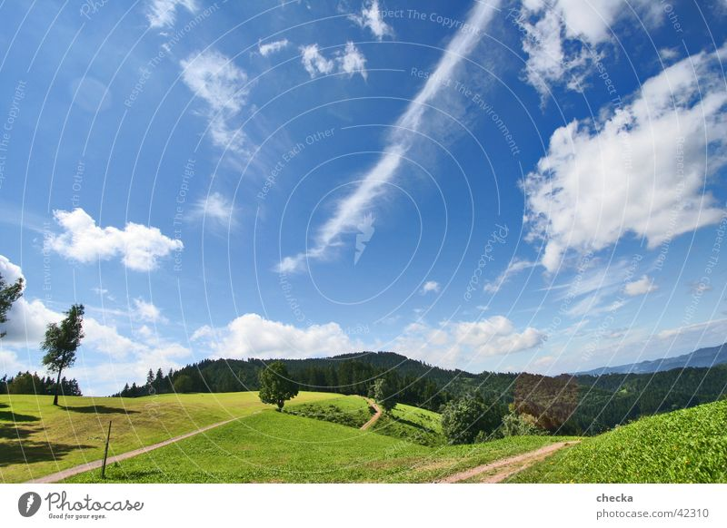 Sky Sun Blue Summer Joy Vacation & Travel Clouds Forest Meadow Mountain Happy Landscape Fresh Leisure and hobbies Idyll Hill