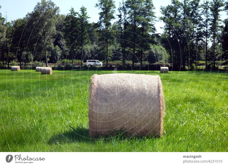 Hay roll in the field round bales Hay bale agrarian culture Agriculture Summer Field Exterior shot Straw Harvest Meadow trees Bale of straw Deserted nobody