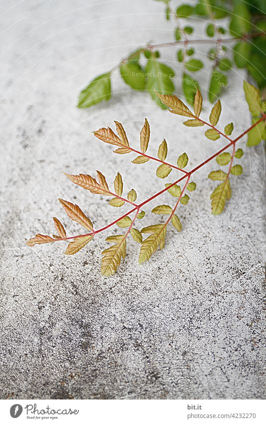 Ranking Tendril Plant Wild Wild plant Green Foliage plant Wall (building) Wall (barrier) Wall plant Gray Fresh Growth wax Nature Autumn Leaf Creeper Overgrown