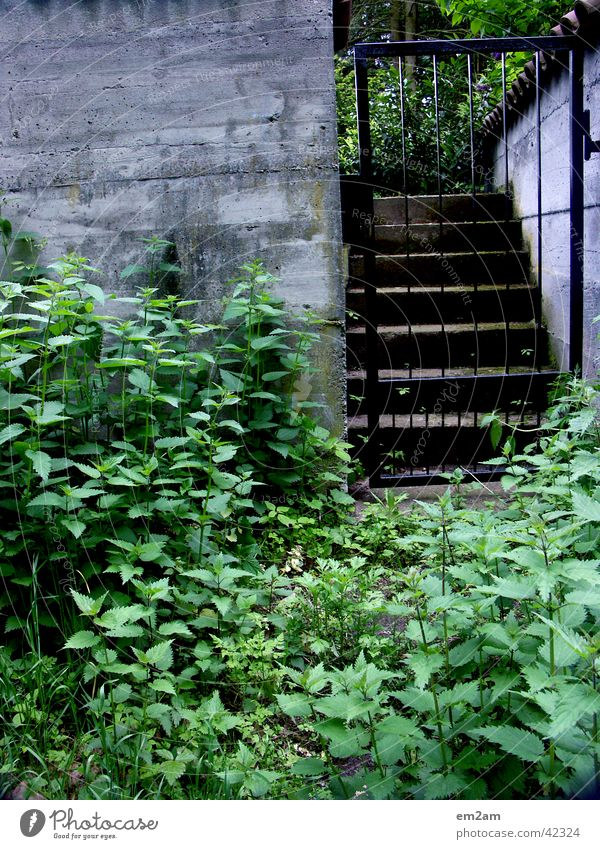 transition Grating Passage Entrance Green Concrete Wall (barrier) Border Triangle Garden overgrown Stairs Gate Plant
