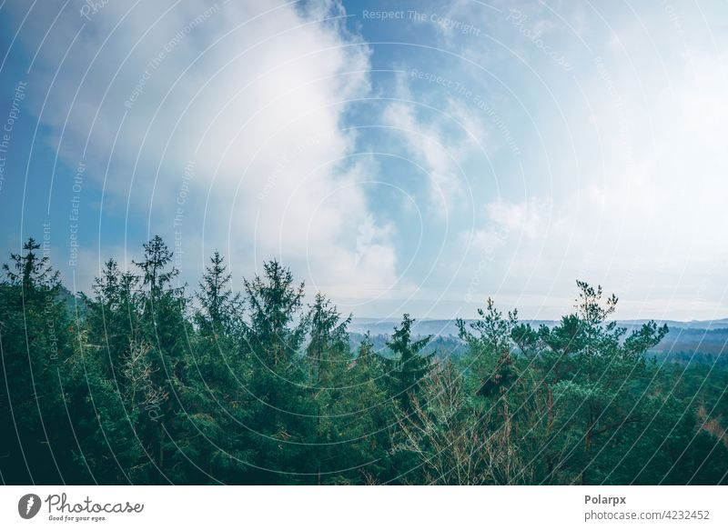 Tree tops in a misty forest mysterious dark treetop spring fairy panorama valley sun beauty view mystery background majestic blue season evergreen tourism magic