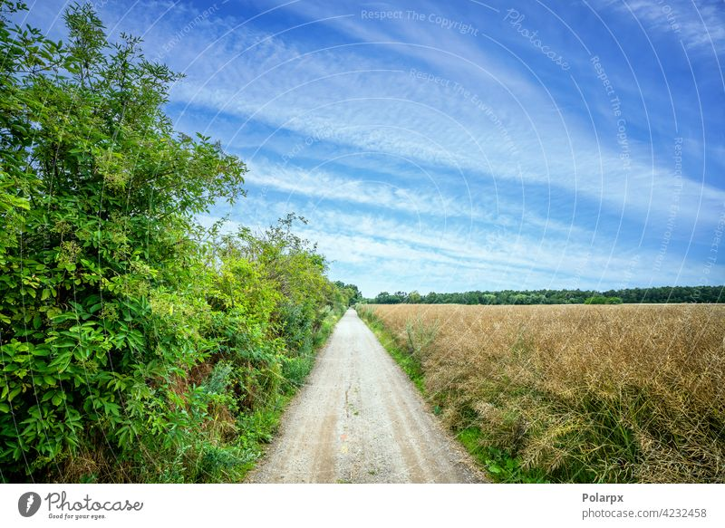 Countryside trail with green bush and fields photography puddle wet transportation hole pathway desert open beauty scene track day sunset forest wild rough car