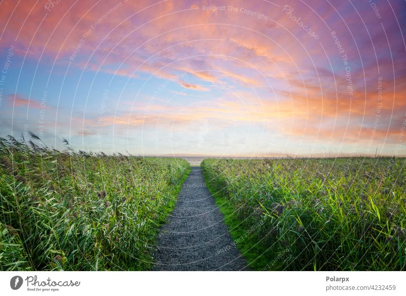 Trail to the beach in a colourful sunset peace amazing natural sunlight sunny scene color sunrise seaside day grass scenic beautiful hike shoreline twilight