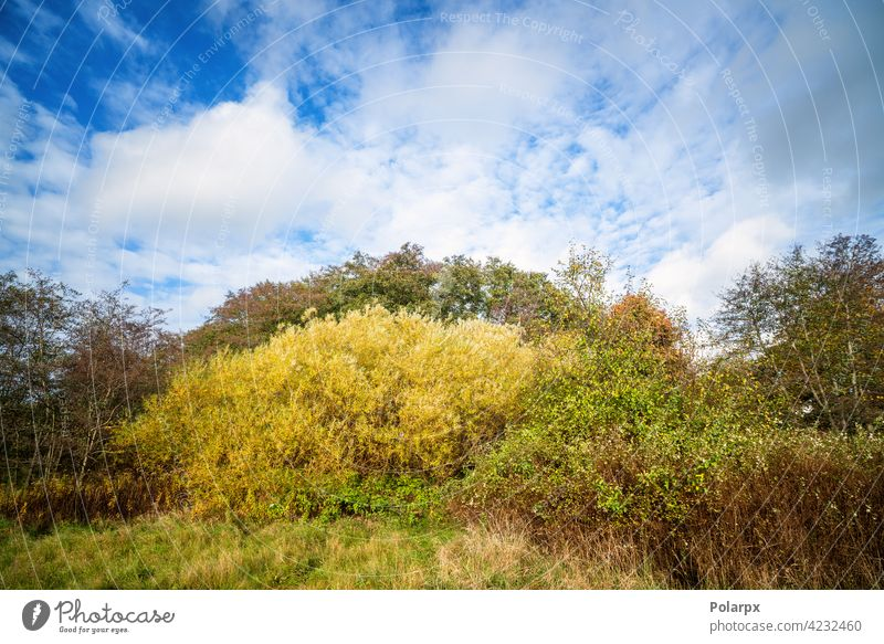 Colorful nature scene in a wilderness setting national park tree trunk cloud - sky fern bush land sweden vitality root uncultivated travel destinations